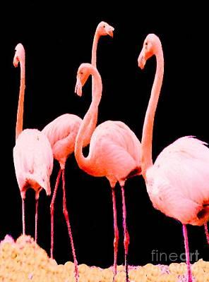 Photograph - Florida Flamingos by Merton Allen
