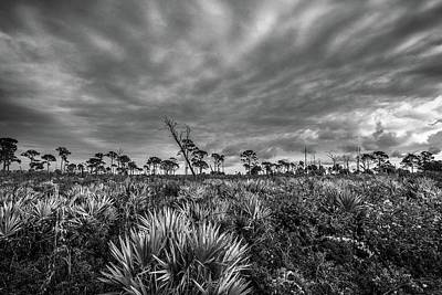 Photograph - Florida Flatwoods by Christopher Perez