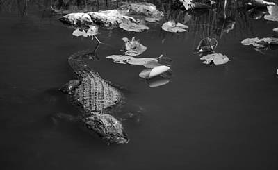 Art Print featuring the photograph Florida Gator by Jason Moynihan