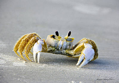 Florida Ghost Crab Art Print by Kathy Ponce