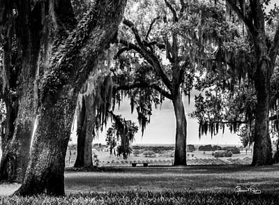 Photograph - Florida Interior From Bok Gardens by Susan Molnar