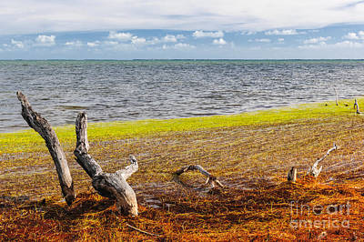 Seaweed Photograph - Florida Keys Colors by Elena Elisseeva