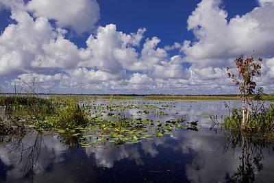 Waterlilies Photograph - Florida Lakes by Zina Stromberg
