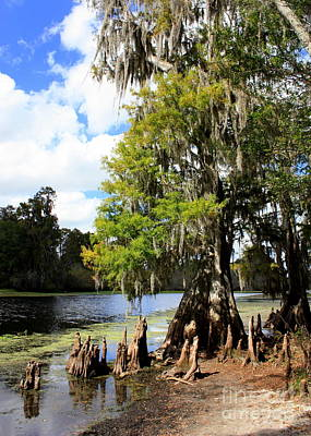 Cypress Knees Photograph - Florida Landscape - Lettuce Lake by Carol Groenen