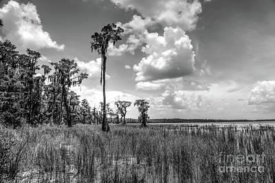 Circle B Bar Photograph - Florida Landscape by Felix Lai