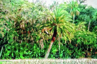 Photograph - Florida Loop by Alice Gipson