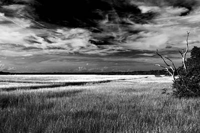 Florida Marsh Art Print by Marcus Adkins