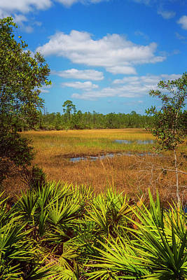 Photograph - Florida Marsh by Tom Singleton
