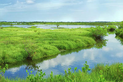 Photograph - Florida Marshland by John M Bailey