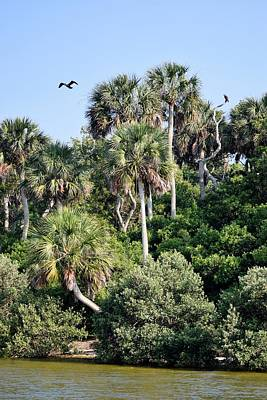 Photograph - Florida Nature Coast Islands 1 by Sheri McLeroy