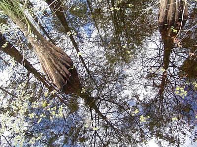 Photograph - Florida Old Swamp by Florene Welebny