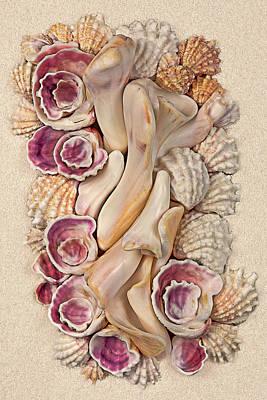 Seashell Photograph - Florida Opus 08 by Carol Zee