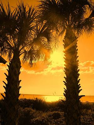 Photograph - Florida Orange by Ian  MacDonald