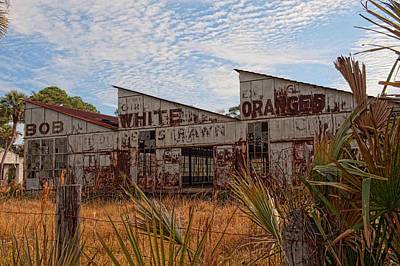 Photograph - Florida Oranges by Keith Swango