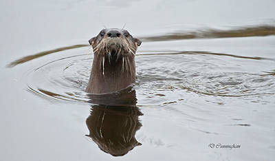 Photograph - Florida Otter by Dorothy Cunningham