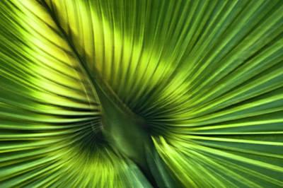 Florida Palm Frond Print by Carolyn Marshall