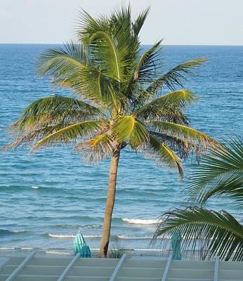 Photograph - Florida Palm Tree by Ron Davidson
