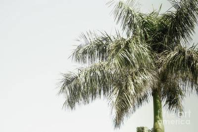 Photograph - Florida Palm Tree Sky by Andrea Hazel Ihlefeld