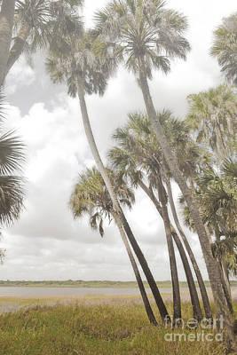 Photograph - Florida Palm Trees Lake Field Landscape by Andrea Hazel Ihlefeld