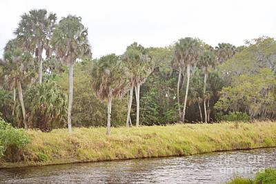 Photograph - Florida Palm Trees River Landscape by Andrea Hazel Ihlefeld