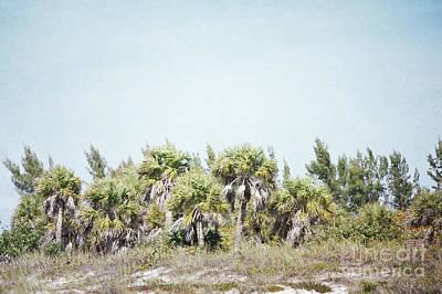 Photograph - Florida Palm Trees Shore Landscape by Andrea Hazel Ihlefeld