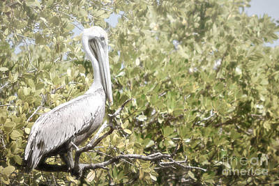 Photograph - Florida Pelican Tree Branch Landscape by Andrea Hazel Ihlefeld