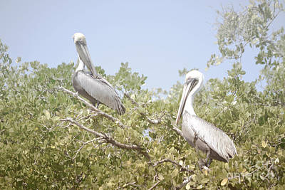 Photograph - Florida Pelicans Trees Landscape by Andrea Hazel Ihlefeld