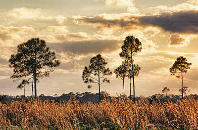 Photograph - Florida Pine Landscape By H H Photography Of Florida by HH Photography of Florida