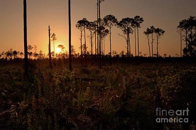 Florida Pine Rocklands At Sunset Art Print