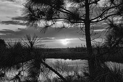 Photograph - Florida Pine Sunset Bw   by HH Photography of Florida