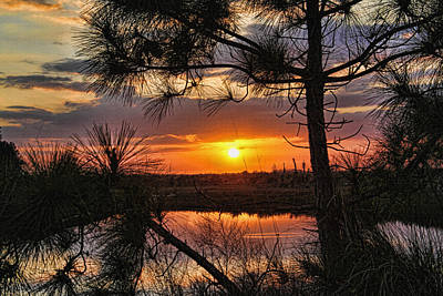 Photograph - Florida Pine Sunset by HH Photography of Florida