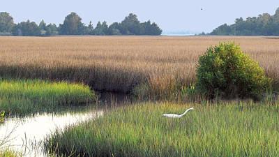 Art Print featuring the photograph Florida Saltmarsh by Peg Urban