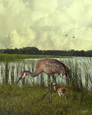 Digital Art - Florida Sandhill Crane With Baby by IM Spadecaller