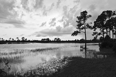 Photograph - Florida Scene by Steven Scott