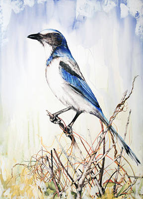 Roots Mixed Media - Florida Scrub Jay by Anthony Burks Sr