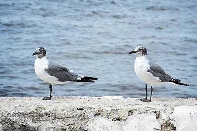 Photograph - Florida Seagulls Pair Landscape by Andrea Hazel Ihlefeld