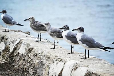 Photograph - Florida Seagulls Rock Landscape by Andrea Hazel Ihlefeld