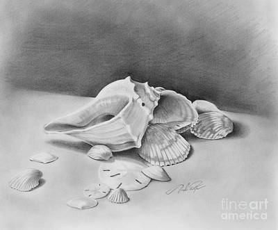 Drawing - Florida Shell Study by Joseph Palotas
