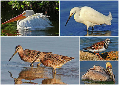 Photograph - Florida Shorebird Collage by HH Photography of Florida