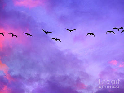 Photograph - Florida Sky With Sandhill Cranes by Judi Bagwell
