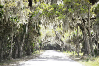Photograph - Florida Spanish Moss Trees Road by Andrea Hazel Ihlefeld