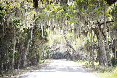 Photograph - Florida Spanish Trees Country Road by Andrea Hazel Ihlefeld
