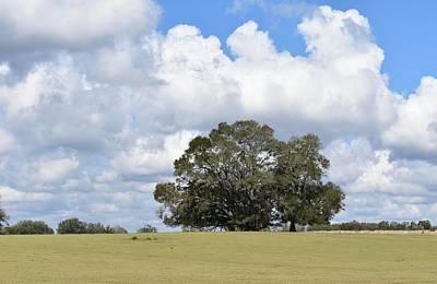 Photograph - Florida Spring - Pasture Turning Green by rd Erickson