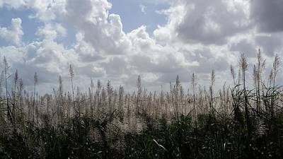 Photograph - Florida Sugar Cane Country by Florene Welebny