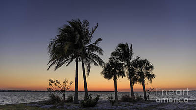 Photograph - Florida Sunset by Edward Fielding