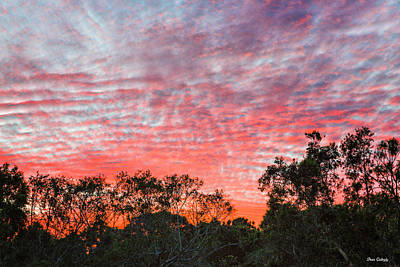 Photograph - Florida Sunset by Fran Gallogly