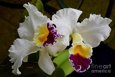 Photograph - Florida Sunset Orchids by Jeannie Rhode