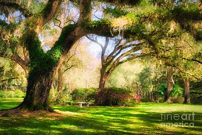 Art Print featuring the photograph Florida Sunshine by Mel Steinhauer