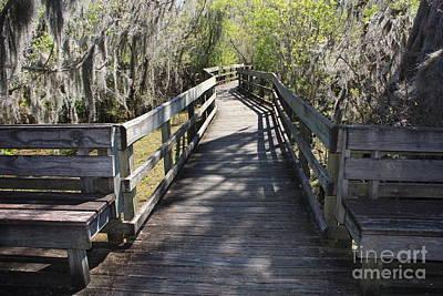 Photograph - Florida Swamp Boardwalk by Carol Groenen