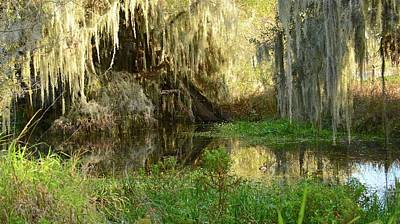 Photograph - Florida Swamp by Carol Bradley